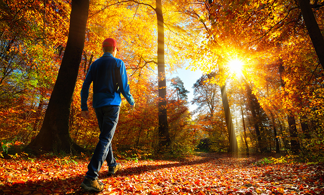 Hiker in the autumn forest with glorious sunlight